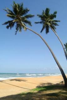 Lastminute Angebote und Lastminute Restplätze für Sri Lanka - Mermaid am Strand des Indischen Ozeans